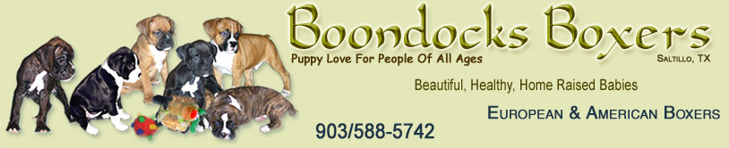 Boondocks Boxers. Saltillo Texas. Sellers of beautiful, Healthy, Home Raised, Well Socialized European and American Boxer Dogs. 903/588-5742.